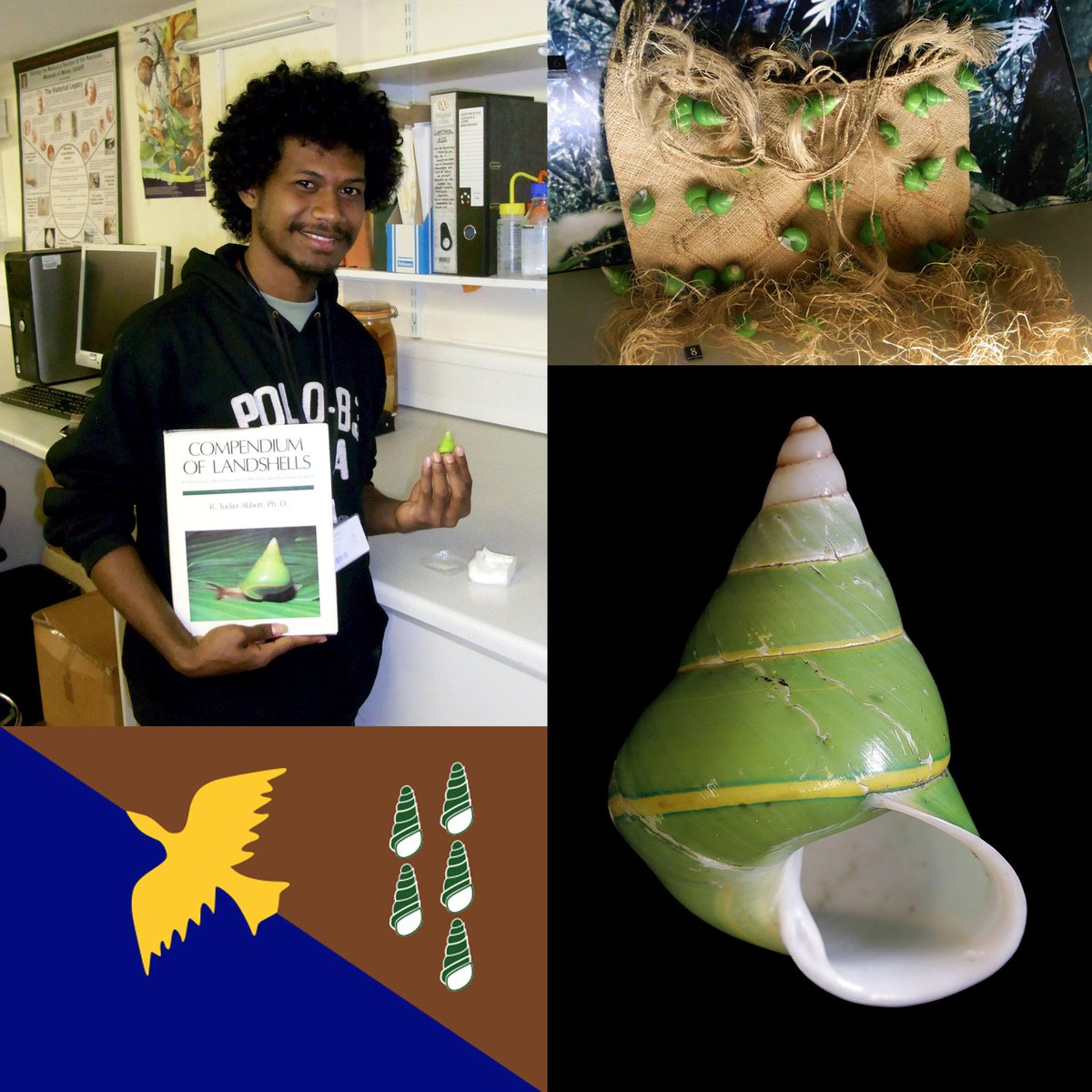 Papua New Guinean biologist Frank Philip at @AmgueddfaCymru with Manus Island Snail, famous on bags, books & a flag! http://t.co/CIYTPgxxSL