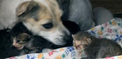 A/c @O_Bairrista RT @g1: Cadela 'adota' e amamenta 5 gatinhos deixados em residência no RS http://t.co/pCbZ11RDe3 #G1 http://t.co/iiIe7YCV4H