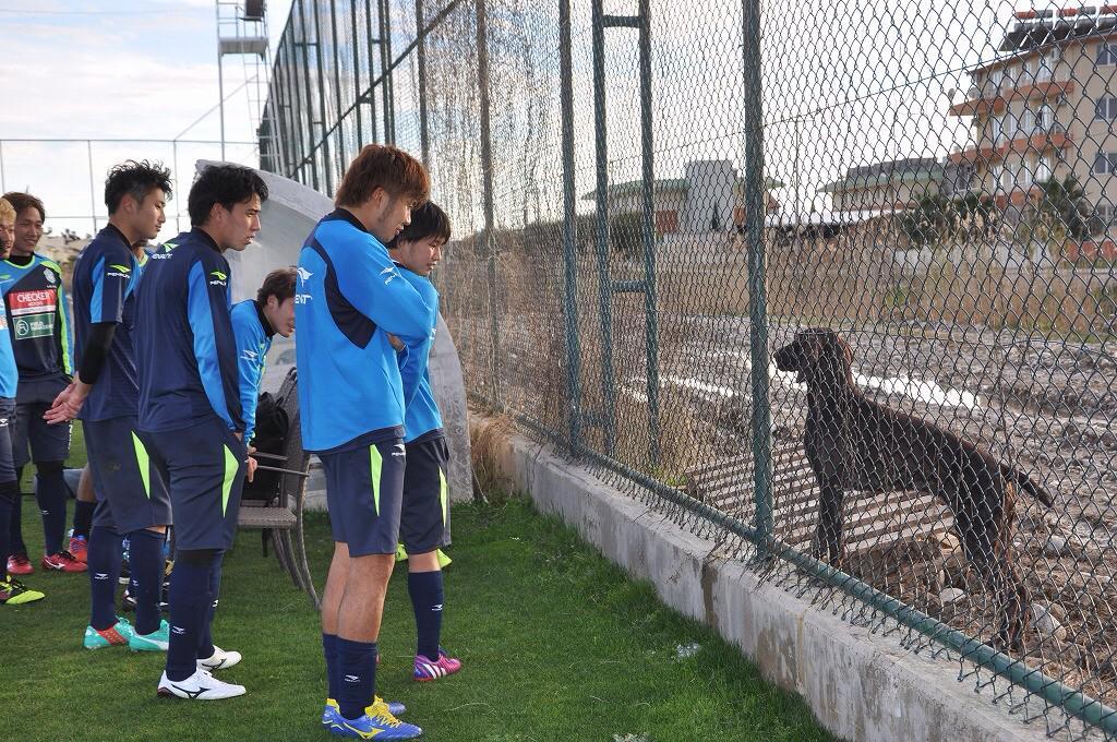 今日のヒトコマ。練習をフェンス越しにずーーっと見ていた犬と、犬がすごく気になる選手たち。 #bellmare pic.twitter.com/JIflPKjxRn