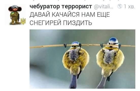 Донецкие террористы тестируют ПВО, РФ продолжает снабжать их боеприпасами, - ИС - Цензор.НЕТ 1617
