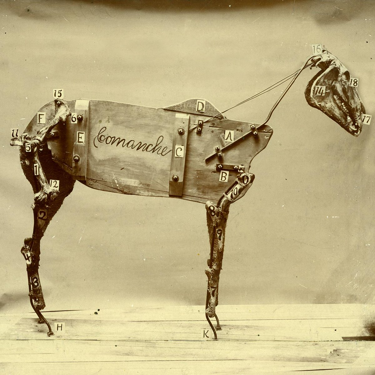 Chad's new album The Horse Comanche is out now! Give it a spin on @iTunesMusic: http://t.co/hDUZFsIoOf http://t.co/tiXQdKNnKI