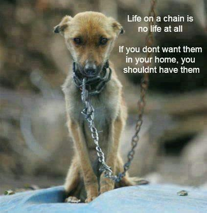 """Life Cheating on Twitter: """"Don't leave your dog chained outside battling the cold. If you won't let them in, give them to someone who will. http://t.co/as41KPnhRZ"""""""