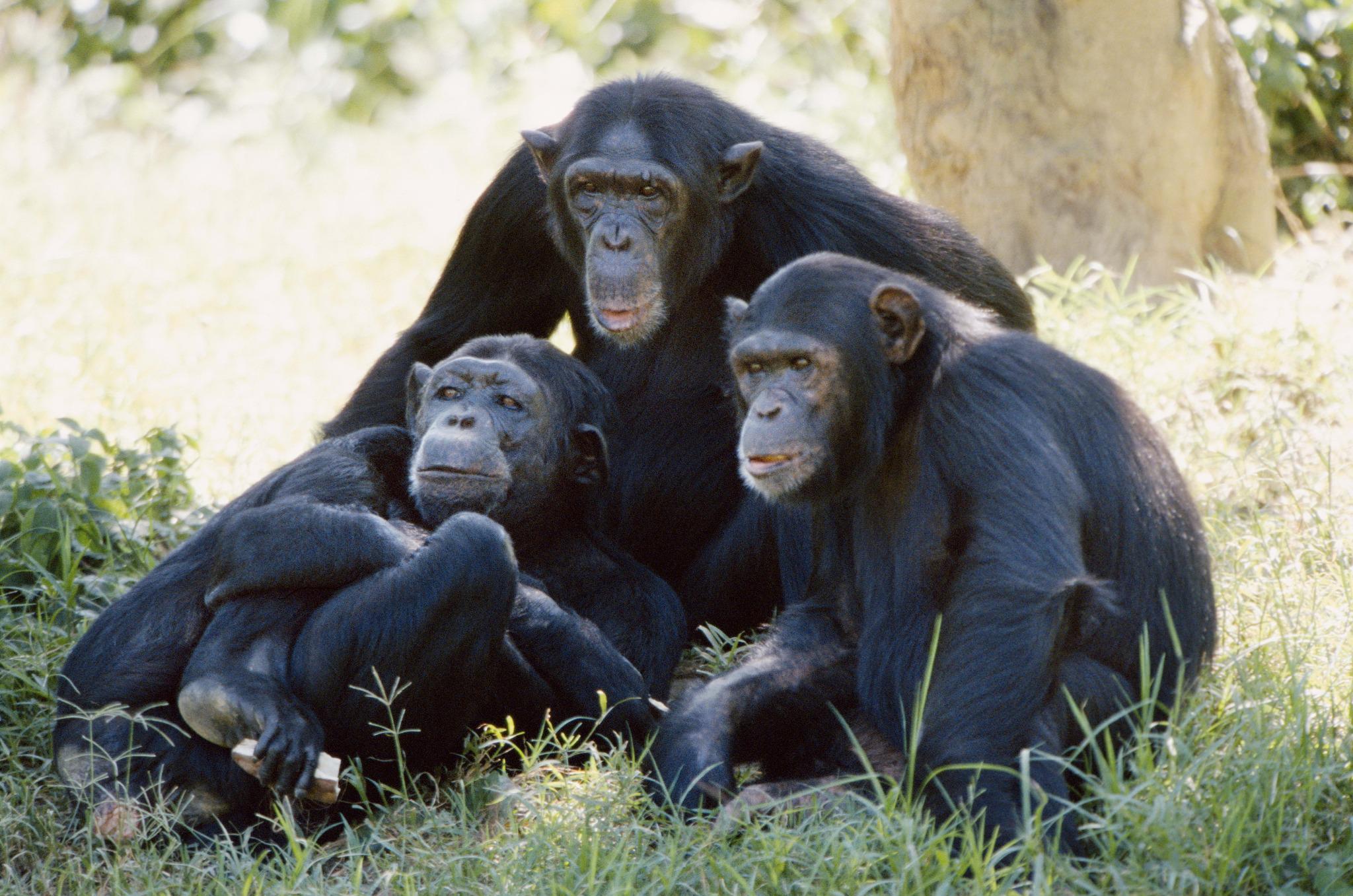 таких картинка с тремя обезьянами мем настоящей леди