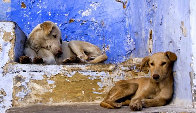 Obbligo di risarcimento per incidenti causati da animali randagi