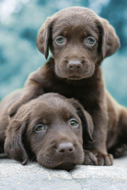 Twin labs
