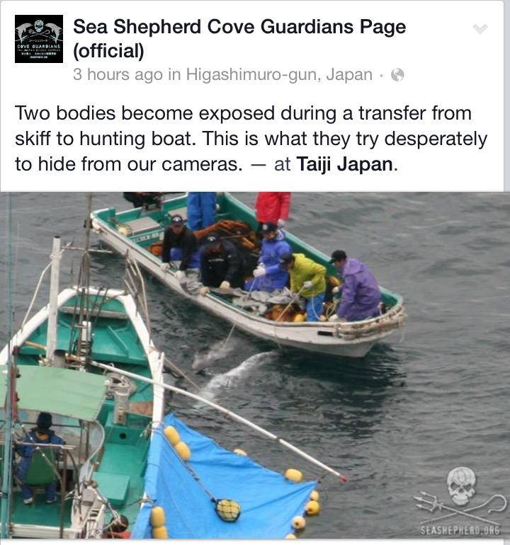 What JAPAN doesn't want you to see.  Thank u fellow @CoveGuardians for your hard work over there.   Much ❤️