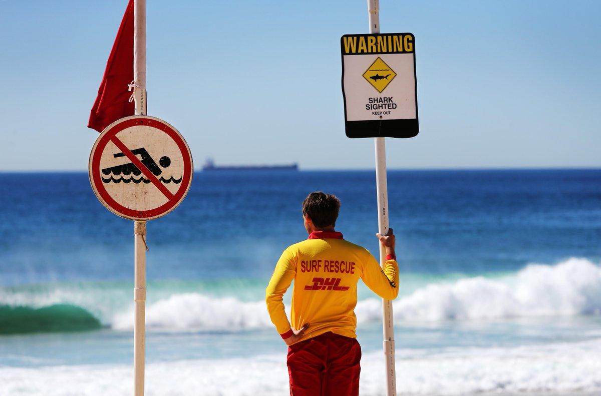 Australia: squalo attacca un uomo e lo uccide