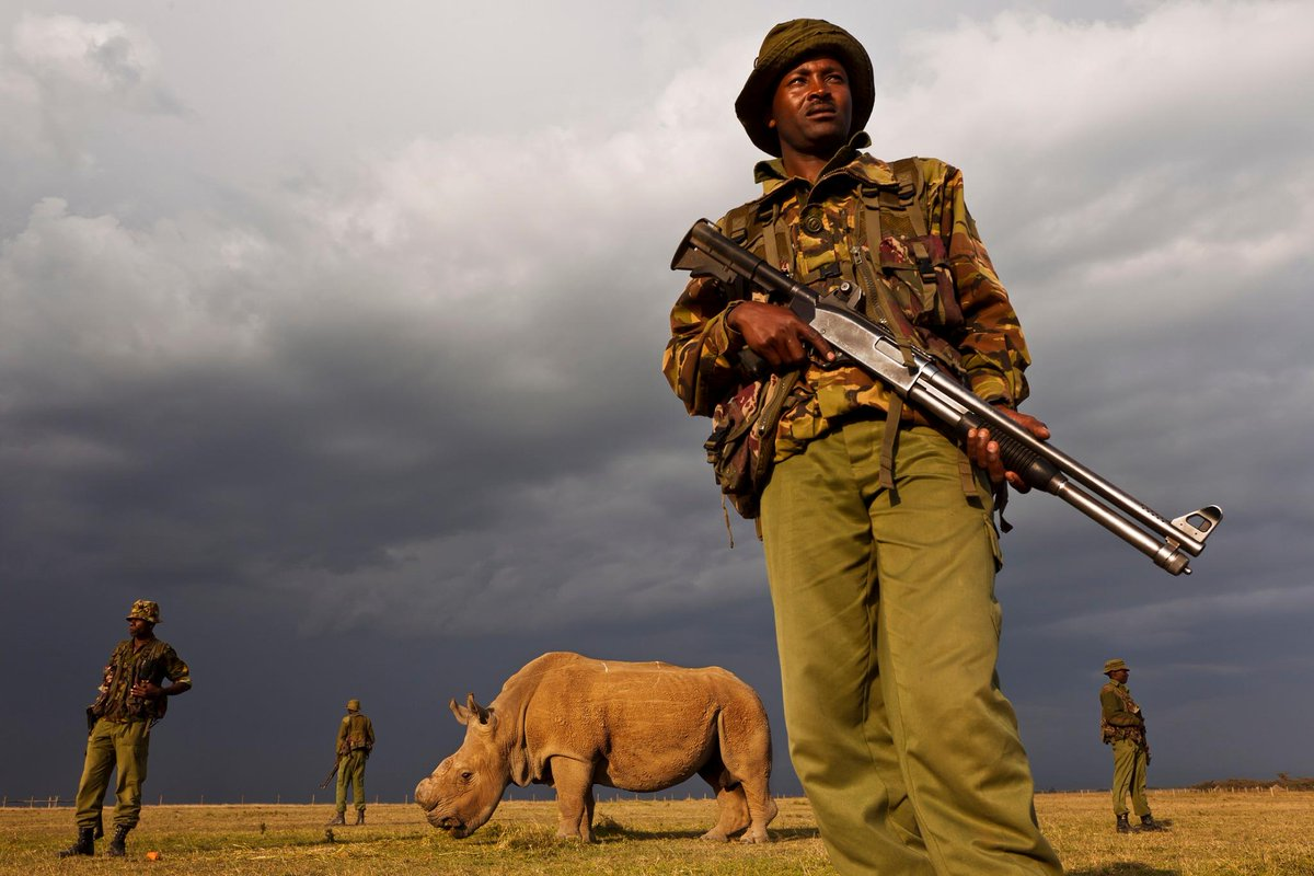 World's Last Male Northern White Rhino Placed Under 24-Hour Armed Guard In Kenya
