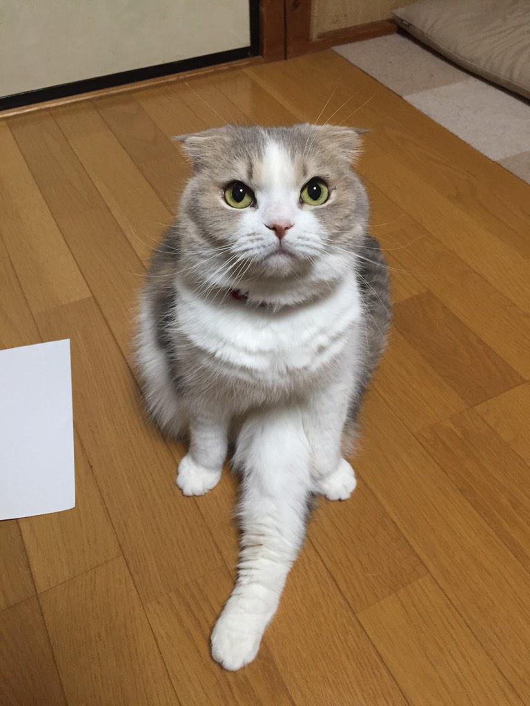 [動物]ちょっと何アピールなのか分からない。[2015年2月]