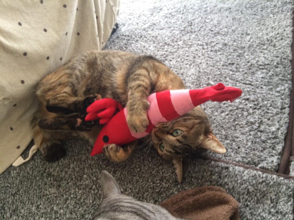 本気になって遊んじゃう! 「けりぐるみ」に夢中になってる猫がかわいい!