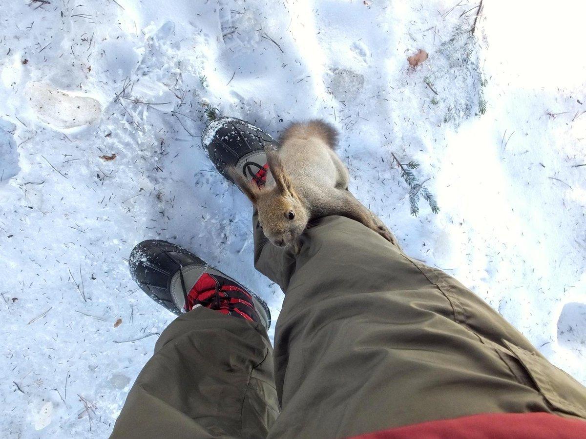 仔リスがそのまま足を登って来るんですけど。 pic.twitter.com/wJ7ErIYuna