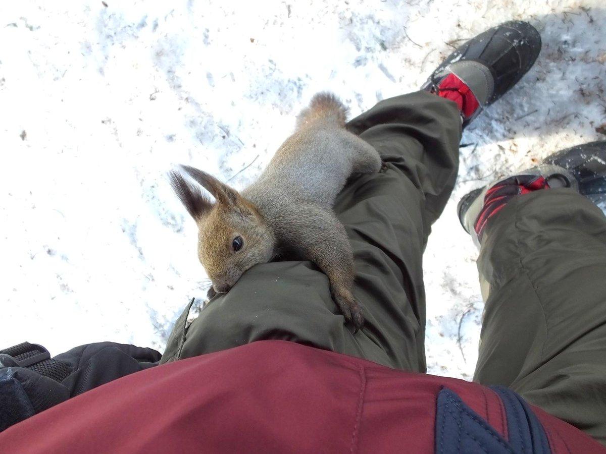 [動物]しまったー。ポケットに入れておいたオニグルミを嗅ぎ付けられた。 オニグルミあげても割れなくてほとんど食べないのに。[]