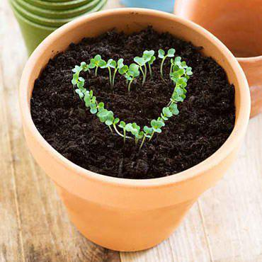 RT @CoronaTools:Tips for Success w/ #Seedlings on #plantchat @AHS_Gardening @margaretroach http://t.co/7E6SF70xOU http://t.co/bh8U7lpbVu