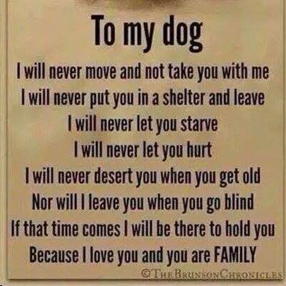 test Twitter Media - RT @indytrainerbob: This how I feel !!!!!!!!!!!!!!! Please read and share... #lovemypet #AnimalRights http://t.co/gfERHjS2rt