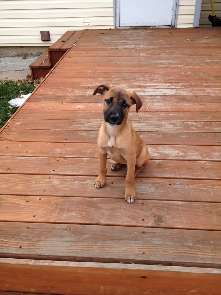 Attention #denver ... LOST DOG: Cleo, puppy, skittish. Last seen 1pm Confluence Park. DM me or @Lower48Kitchen http://t.co/z0ANS27uVO