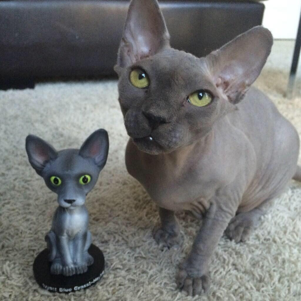 Hairless Cats On Twitter Quot Who S Your Favourite Hairless