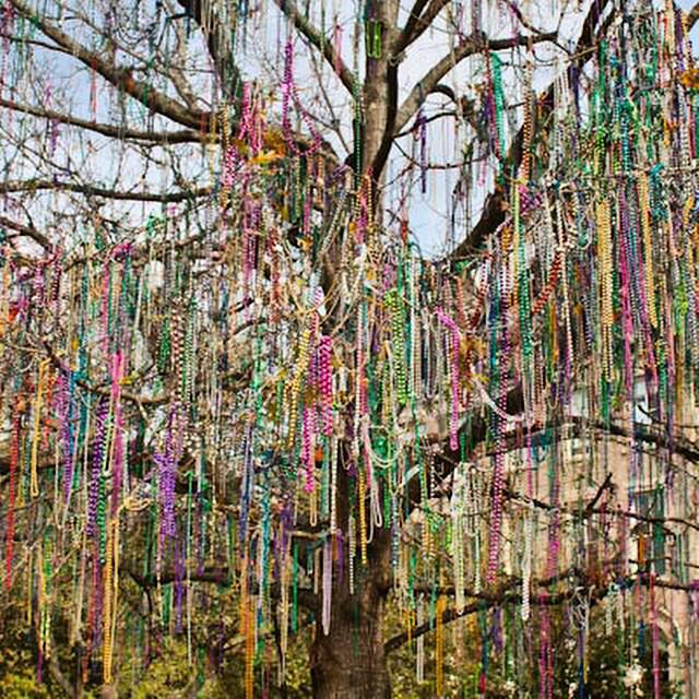 Mardi Gras is in the air...and in the trees! MT @weddingsbyallie: These rare trees only grow in #NOLA http://t.co/ZTWW0vAuE9