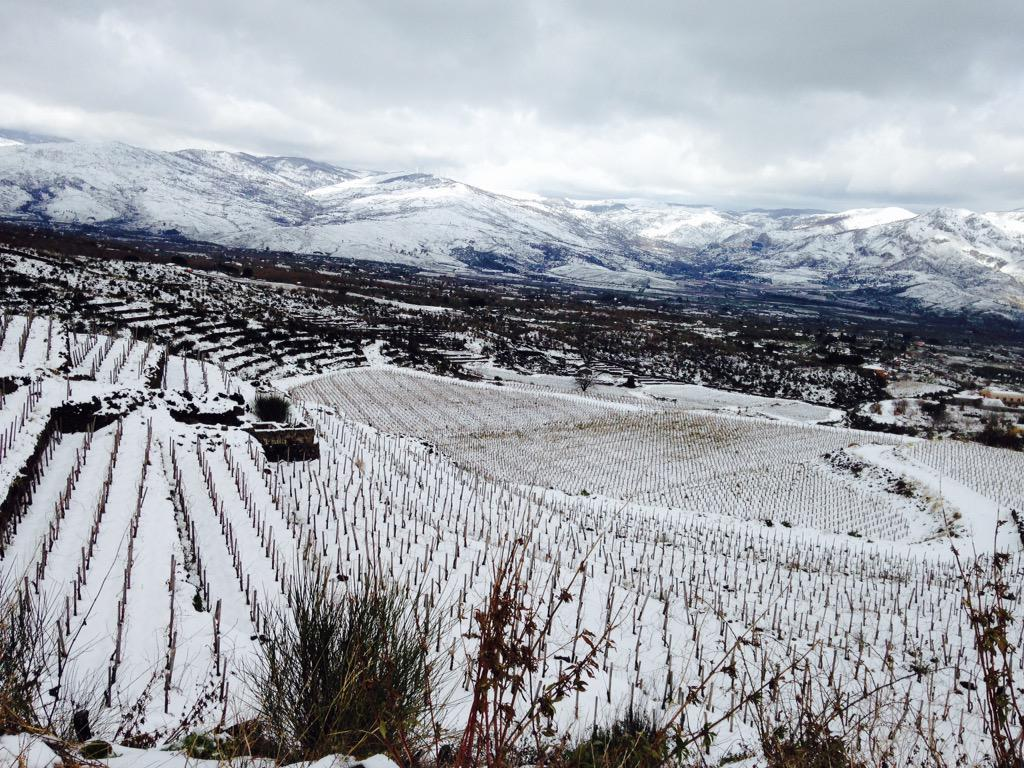 Top #wine pic >>> @Passopisciaro1 >>> Magic view of vineyards at Guardiola ..on the slopes of Sicily's Mt Etna. http://t.co/U8xmc2xjQF