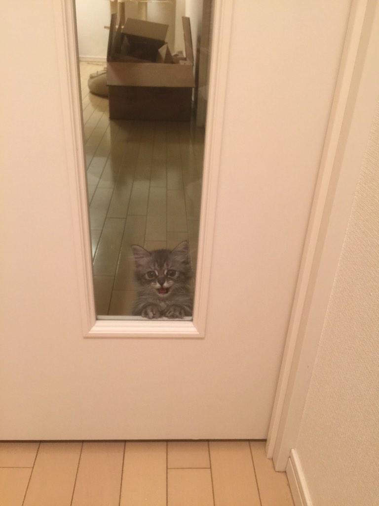 さっき一瞬自宅に寄ったんですが、帰り際、玄関でのムーちゃんのこの行動に、家を出る時間が予定より遅れました… pic.twitter.com/nO81dazKgO