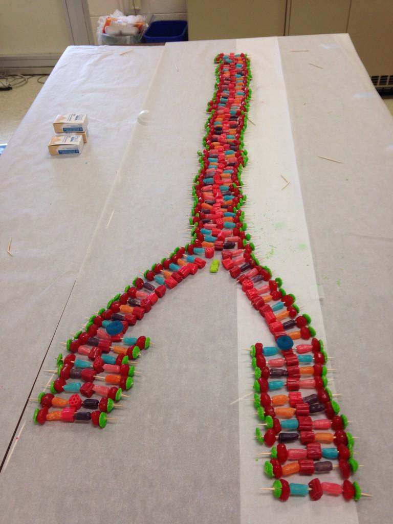 how to make a 3d dna model with candy