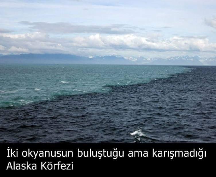 gulf of alaska - 1000×502