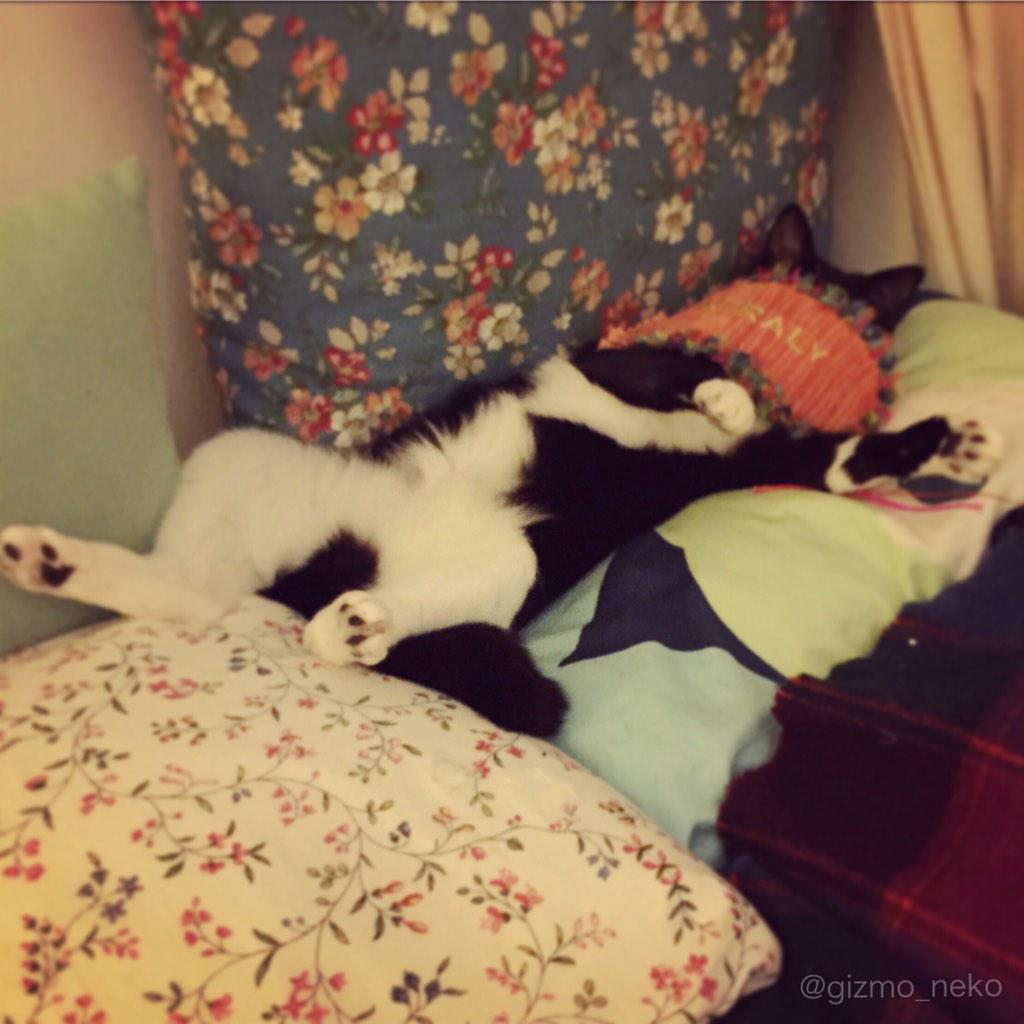 ふと見たら猫がアイマスクしながら寝てて腹筋崩壊した pic.twitter.com/WNNnO9TZMa