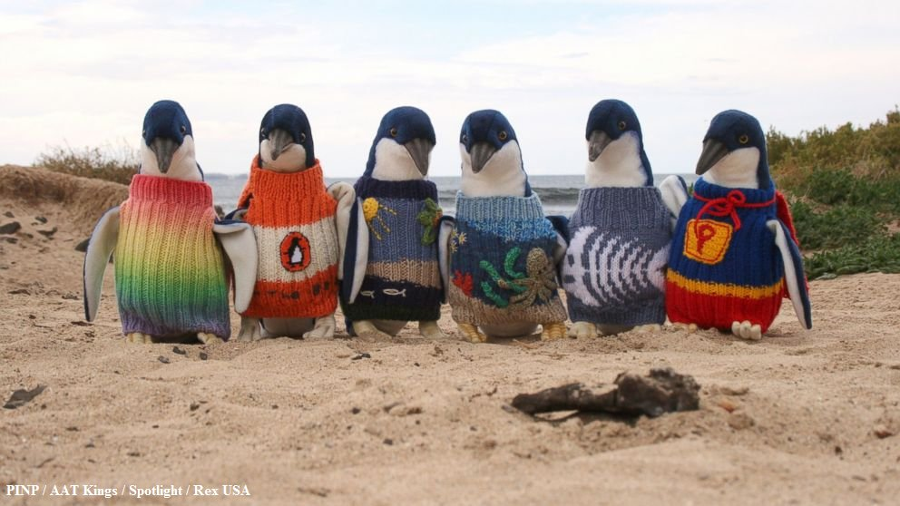 A 109-Year-Old Australian Man Is Knitting Tiny Sweaters For Tiny Injured Penguins