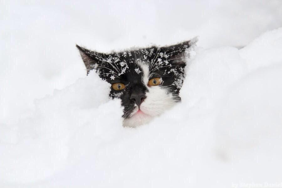 l'hiver ! B9kHbGNIMAEoMZS
