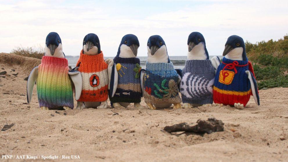 豪州最高齢のお爺さん、怪我したペンギンのために小さなセーターを編んで、過ごしている。@ABC: : abcn.ws/1DHgUYA pic.twitter.com/ulxc9DAai2