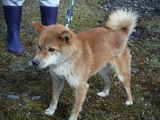 企画振興部フジクラより 室根地域で保護した茶色の柴犬のもとの飼い主を捜しています。 一関保健所環境衛生課(電話:0191-26-1412 内線245)にご連絡ください。 http://t.co/1nsnmpFILc http://t.co/ASisgp8Ytb