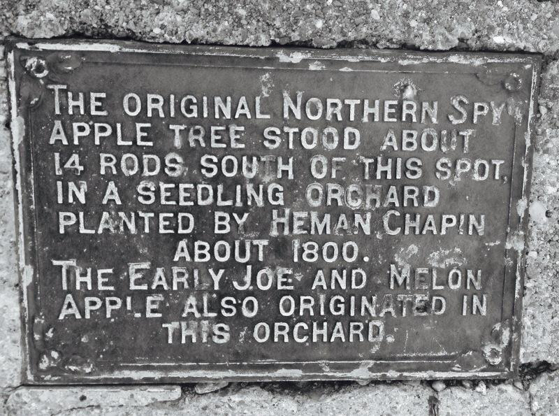 The Holy Land, as far as we're concerned. RT @sincider: A closer view of East Bloomfield, NY - Northern Spy plaque. http://t.co/ZGHkHLiz2W