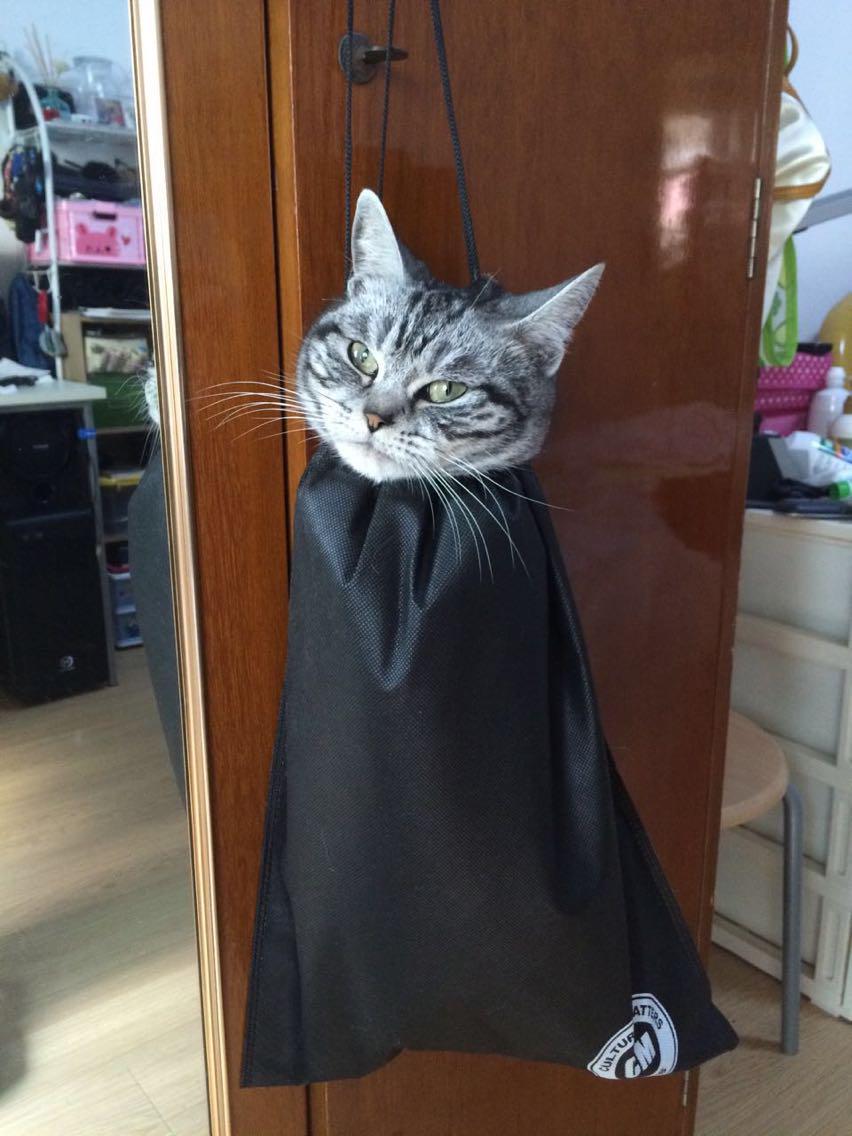 朋友体罚他们家闯祸的猫…… #cat #neko #ねこ http://t.co/xxAsiHcCEF