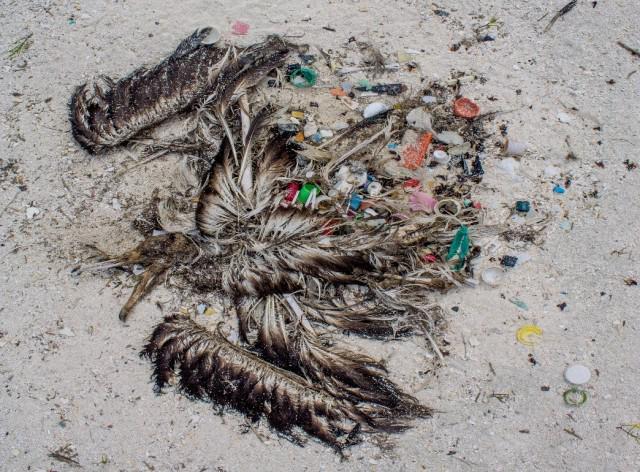 One albatross stomach, 558 piece of plastic. Sad reality of #plasticpollution: http://t.co/Ak8Xlv9TUk  http://t.co/l2cuJuoXnA MT @Surfrider