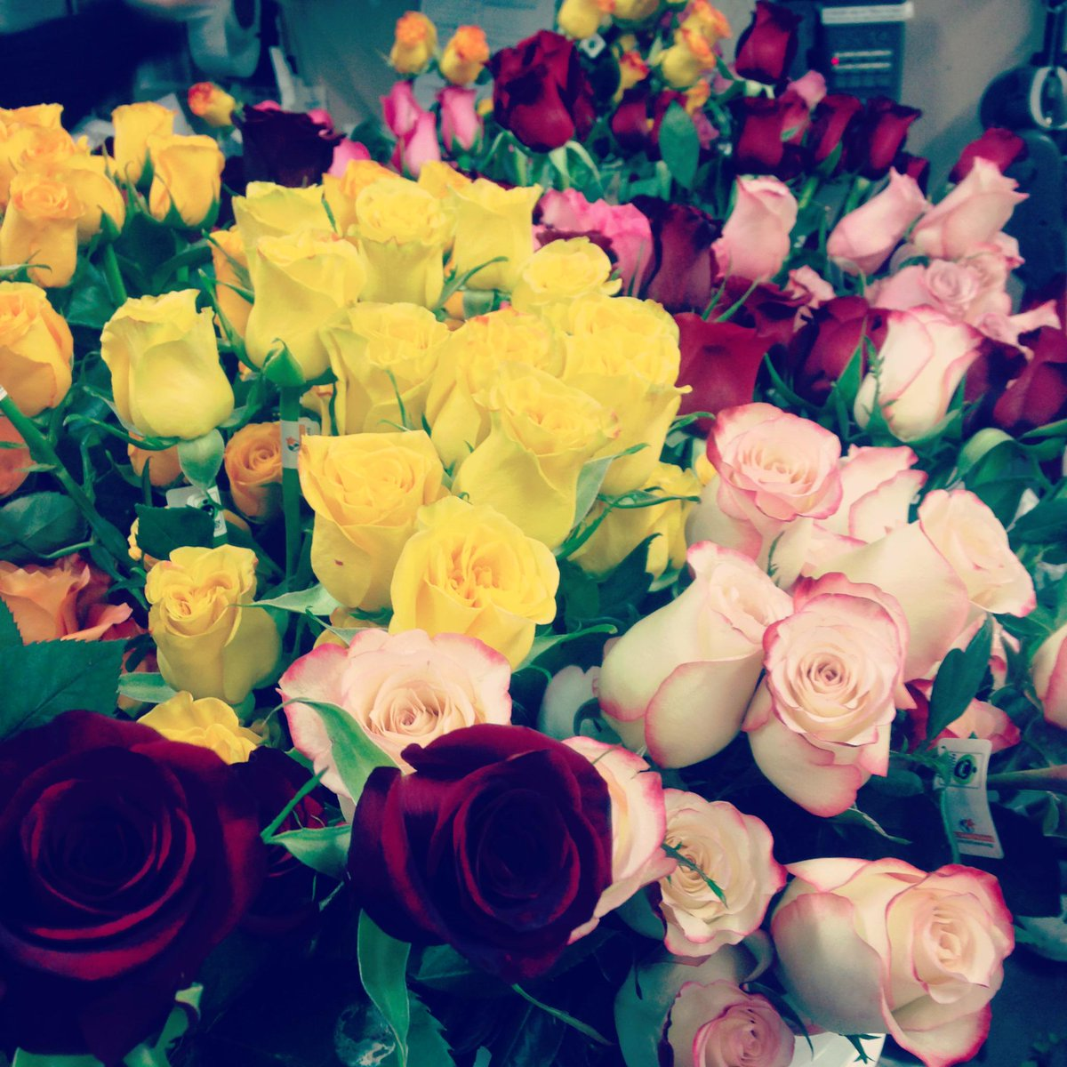 """Flowers. We have over 70, square feet of refrigeration, which is home to one of the largest fresh cut flower inventories in the country! Our commitment to the """"Cool Chain"""" guarantees our flowers are maintained and handled in an environment ensuring top quality and long shelf life."""