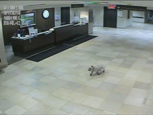 This woman's dog walked 20 blocks to visit her in the hospital http://t.co/zLZ62QDJw7  #pets
