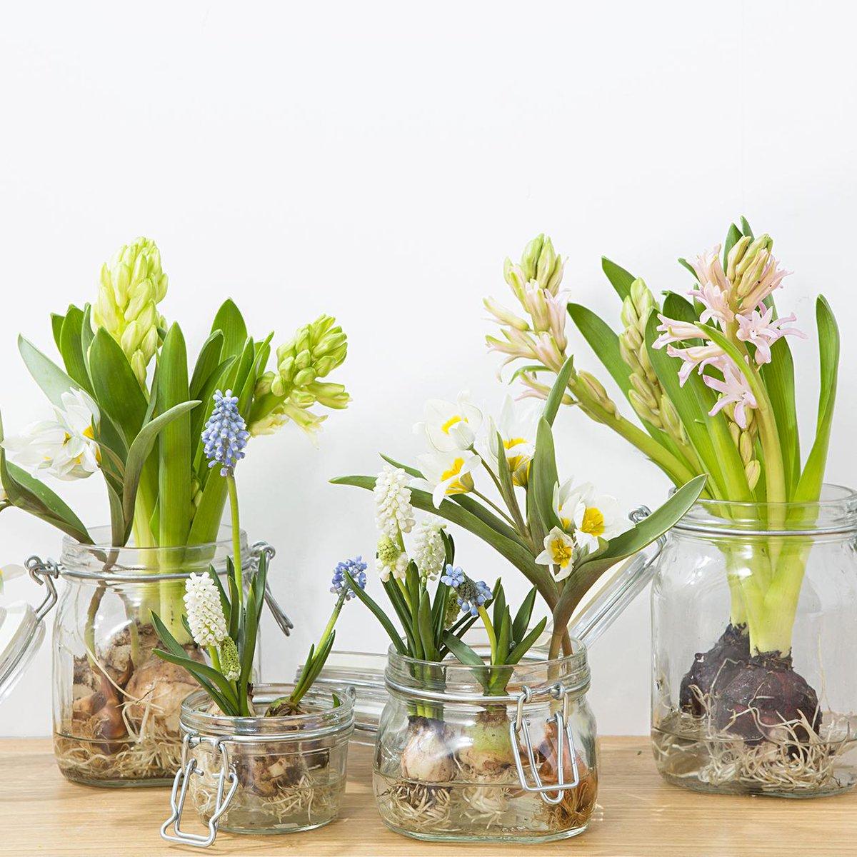... イブの花金に、ヒヤシンス、チューリップ、ムスカリを。個性的なフォルムは、普段の切花とはまた違った趣きがあります。球根植物ですので、http://muji.lu/1J6Z0Df  ...