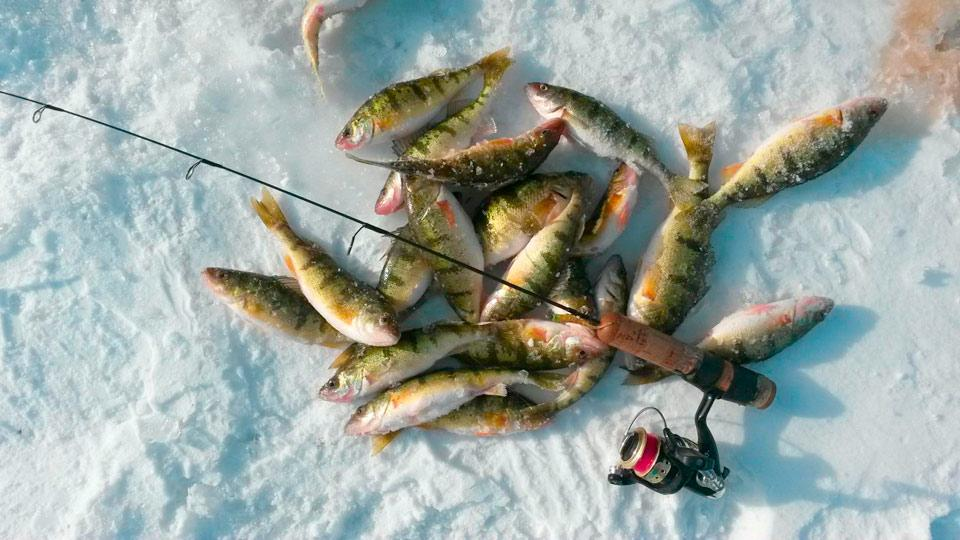 Torch lake michigan 4torch twitter for Bucs fishing report