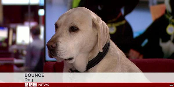 Best/most obvious/most pleasing BBC caption introducing a guest that I've seen for a while http://t.co/hfRY8ql3YQ
