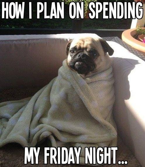 Unf Graduate School On Twitter Like A Snug Pug Happy Friday Y