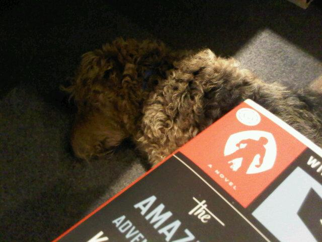 He's snoring a bit, but my dog is still very good company for this Kavalier & Clay #OBOC #readingsprint ... http://t.co/gWiIGxbnuQ