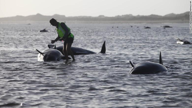 Balene arenate in Nuova Zelanda