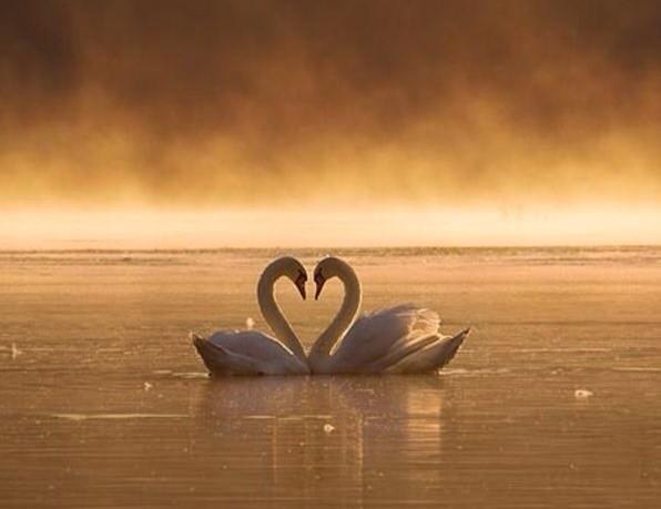 Dünya sevgilimdir. http://t.co/qEpSWo3b5x