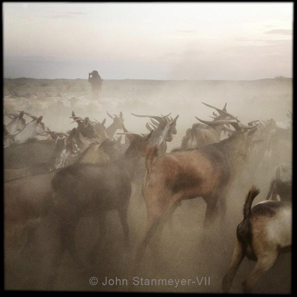 Goats wander back to Bouri village after grazing in nearby grasslands. @OutofEdenwalk @Natgeo #Ethiopia @NatGeoMag http://pic.twitter.com/wDMQUK41