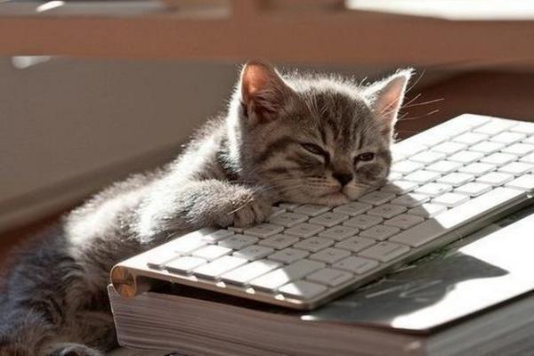 Resultado de imagem para cat working
