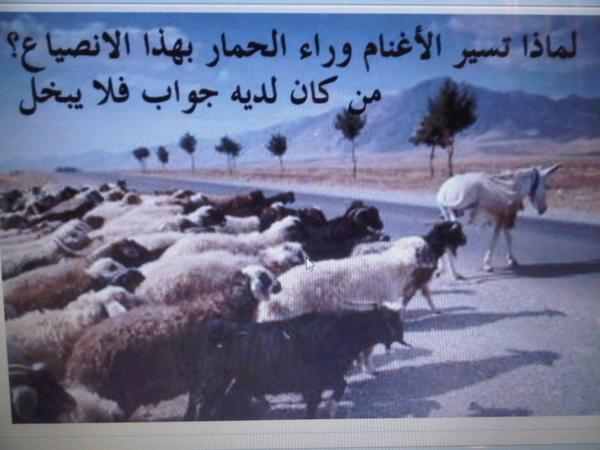 يا علماء المسلمين دعونا من داعش و الوهابية والشيعة و اخبروا العالم .... BAmGxhrCMAAj5Ph