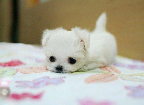 小さい子犬可愛い pic.twitter.com/IAHlH2bhwY