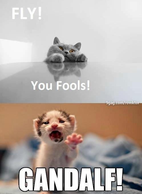 Pepper On Twitter Cat Meme Youre Welcome Httptcoe2se4e3q