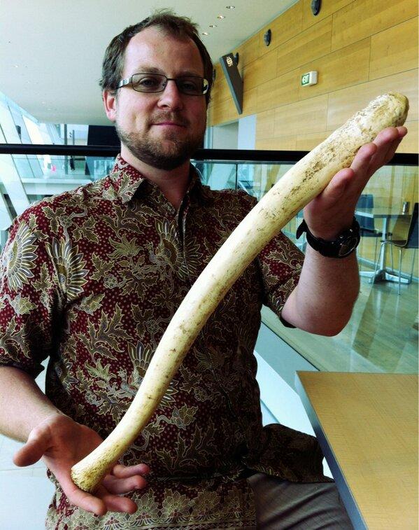BBC Four - Walrus baculum - Secrets of Bones, Sex - In pictures: Sex