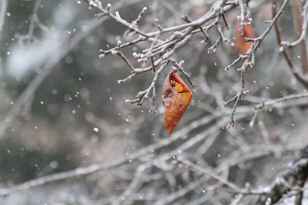 RT @starstryder: Empty apple shell, stripped of its flesh by black birds, hangs frozen in snow. http://pic.twitter.com/Jn38uZSU