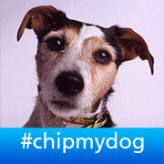 Thumbnail for Dog microchipping: live Twitter Q&A #askdefra